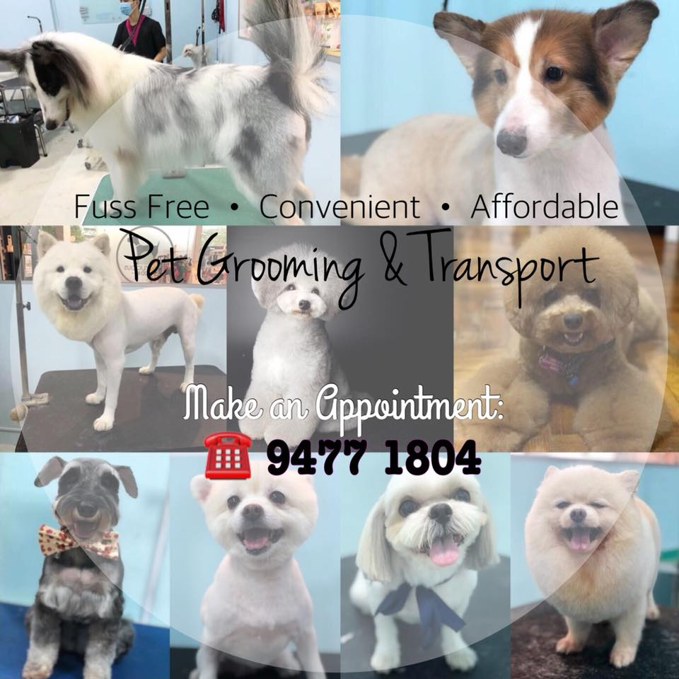 Pet Grooming Services With Transport In Singapore Doggylicious