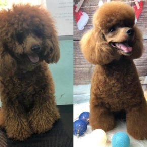 Photo Gallery Pet Grooming Services With Transport In
