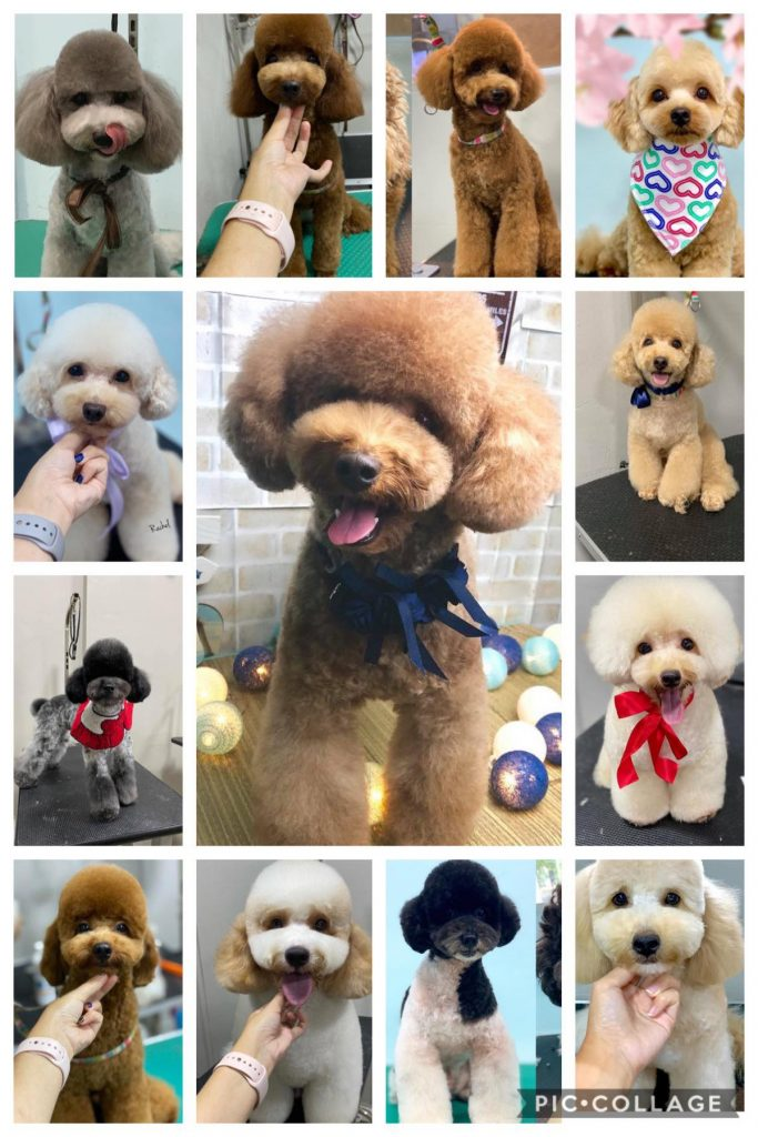 Photo Gallery Pet Grooming Services With Transport In Singapore